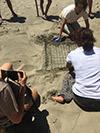 Tartarughe alla spiaggia del porto di Casal Velino